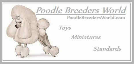 Toy Poodle Puppies Ohio